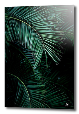 Palm Leaves 9