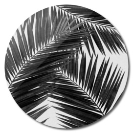 Palm Leaf II BW