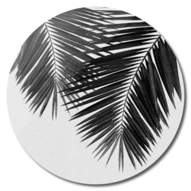Palm Leaf III BW
