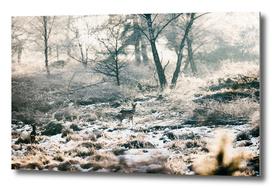 Roe deer in snowy winter landscape