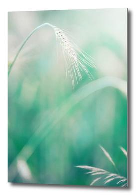 Wheat in grass