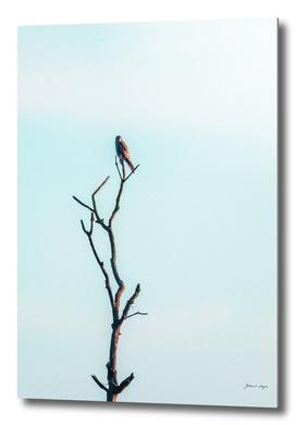 Bird of prey in dead tree