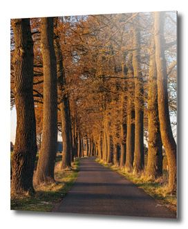 Country road with autumn trees in low sunlight