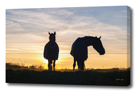 Silhouette of two horses at sunset