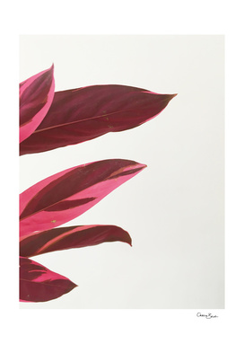 Red Leaves I