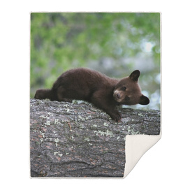 Black Bear Cub Climbing a Tree Photograph