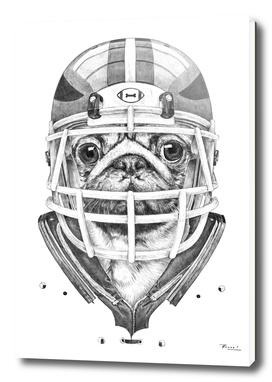 American Pug Football
