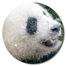 Giant Panda Geometric Polygon