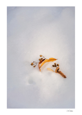 Beautiful golden leaves in the snow