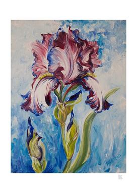 Blue & White Iris