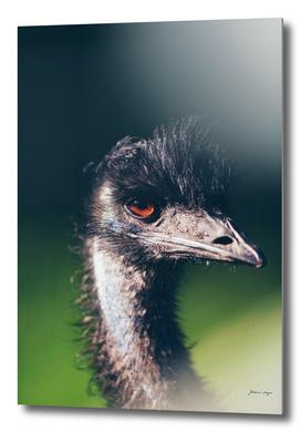 Head of emu bird with eye lit by sunlight