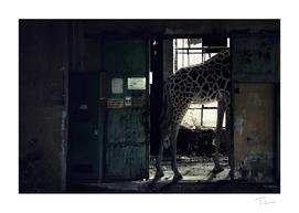 Lost Animals -  Series nr.2