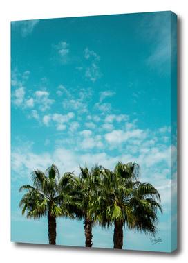 Good vibes. Tropical