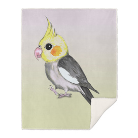 Very cute cockatiel