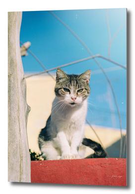 Cat sitting on stone fence