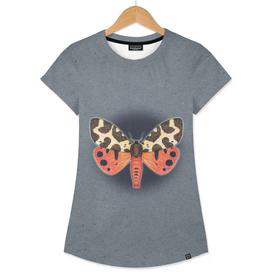 Garden tiger moth