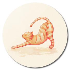 Yoga Cat