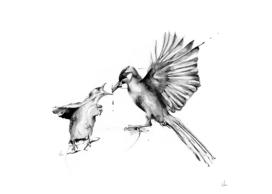 Bird Fuel