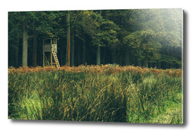 Hunting post in field of autumn forest