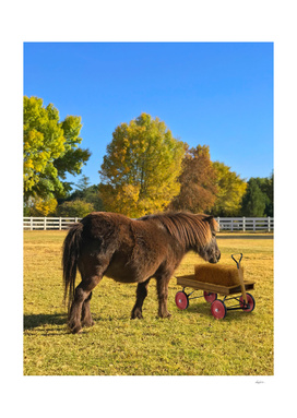 Horse and Wagon