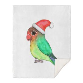 Cute Christmas lovebird