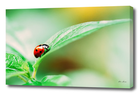 Red Ladybug Insect On Green Leaf Macro