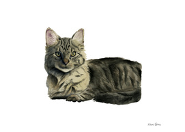 Domestic Medium Hair Cat Watercolor Painting