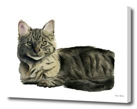 Domestic Medium Hair Cat Watercolor Painting