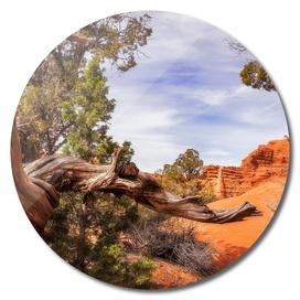 Unique desert beauty at Kodachrome Park in Utah