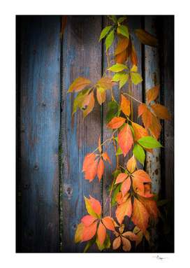 Contrast of Autumn