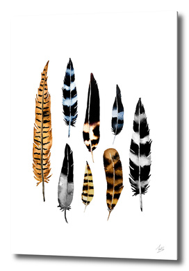 Feather Collage