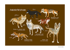Asiatic Wolves