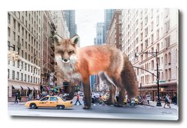 fox in new york