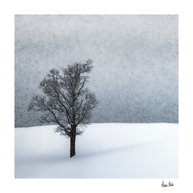 LONELY TREE Idyllic Winterlandscape