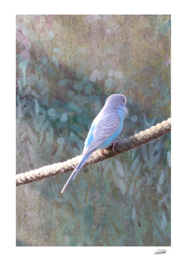 Wildlife Budgie Bird