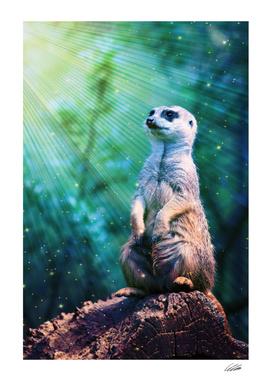 Meerkat with Stars