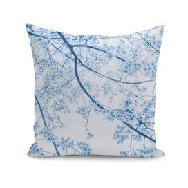 blue cherry blossom