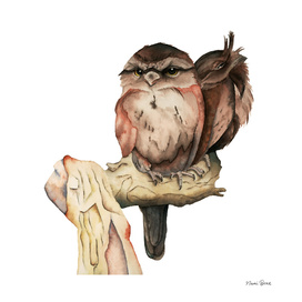 Owl Siblings Watercolor Painting