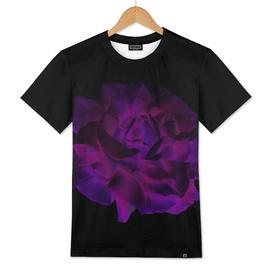 Ultra Violet Velvet Rose loves Black