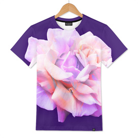 Love Rose on Ultra Violet