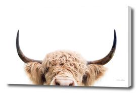 Peeking Cow