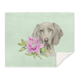 """""""Innocence""""   Weimaraner and Lily Watercolor Painting"""