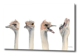 Drama Queen | Ostrich Watercolor Painting