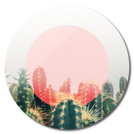 cactus with circle