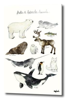Arctic & Antarctic Animals