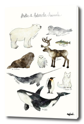 Arctic & Antarctic Animals