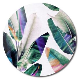 tropical #1
