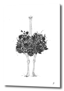 Floral ostrich