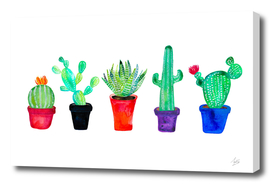 Pot Of Cacti