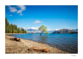 A symbolic willow tree on a clear morning at Lake Wanaka